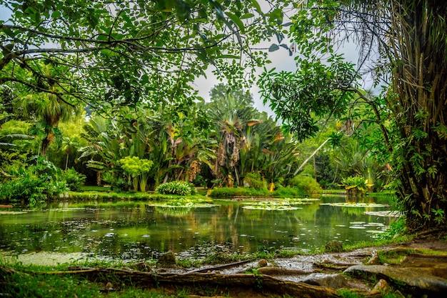 Красивый снимок пруда посреди леса Бесплатные Фотографии