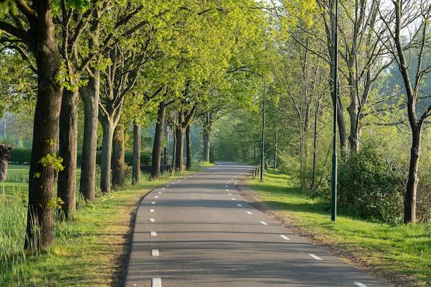 緑の木々に囲まれた道路の美しいショット 無料写真