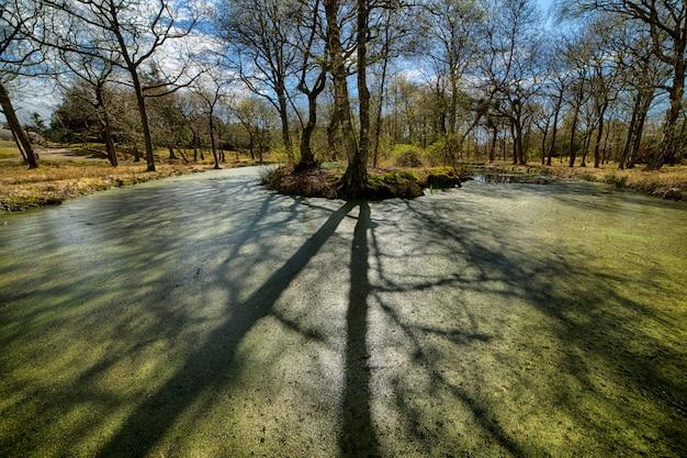 さわやかな天気の中に季節の秋の公園の美しいショット 無料写真
