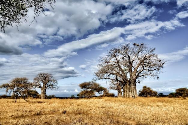 青い空とサバンナ平野の木の美しいショット 無料写真