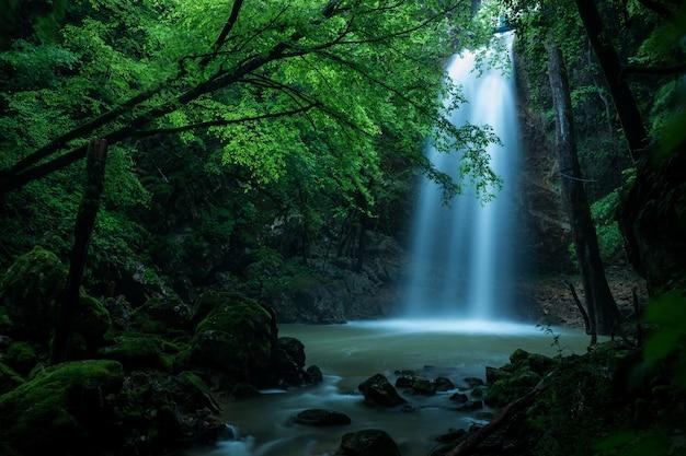 森の中の滝の美しいショット 無料写真