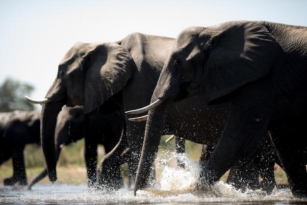 象の群れの美しいショット 無料写真