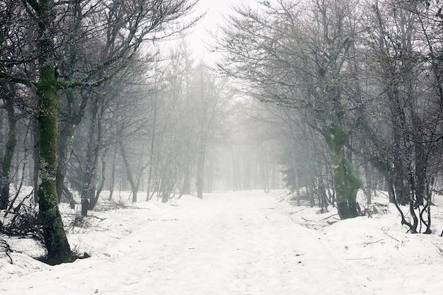 冬の間に雪で覆われた地面と森の裸の木の美しいショット 無料写真