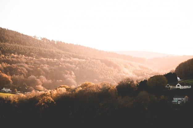 茶色の木々や丘や山の夕暮れの田舎の緑の美しいショット 無料写真