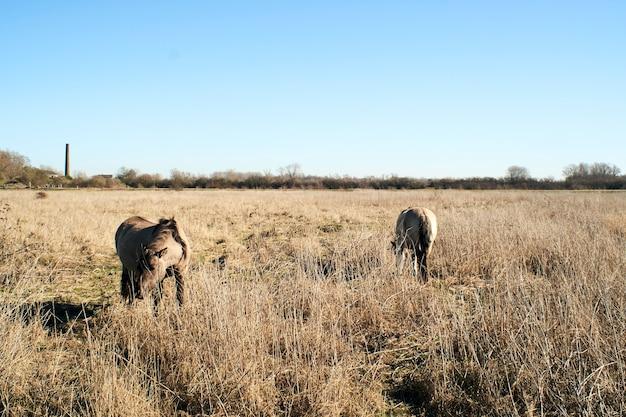 青空の下で乾いた草でいっぱいのフィールドで放牧かわいいロバの美しいショット 無料写真