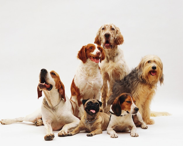 Красивый снимок отдыхающих собак разных пород Бесплатные Фотографии