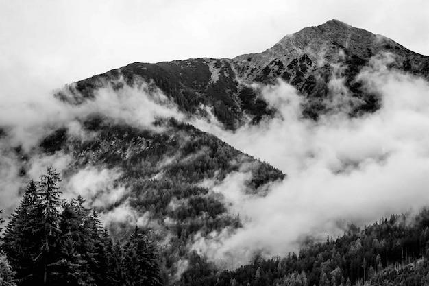 Красивый выстрел из туманных гор в лесу Бесплатные Фотографии