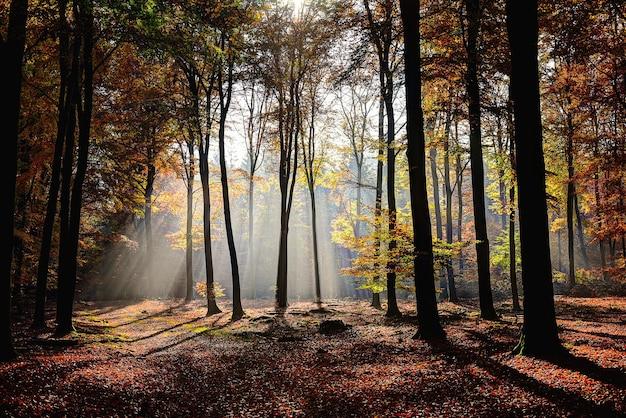 枝を通して太陽が輝いている黄色と緑の葉の木と森の美しいショット 無料写真