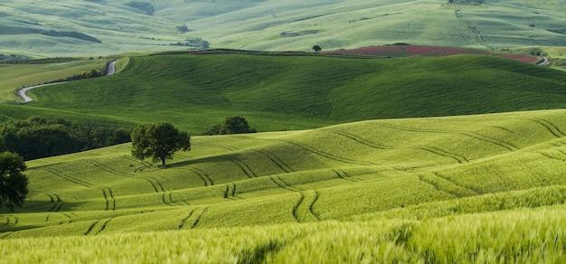 真ん中に狭い道路のある緑の野原の美しいショット 無料写真