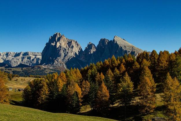 Красивый снимок зеленых деревьев и гор вдалеке в доломитовых альпах, италия Бесплатные Фотографии