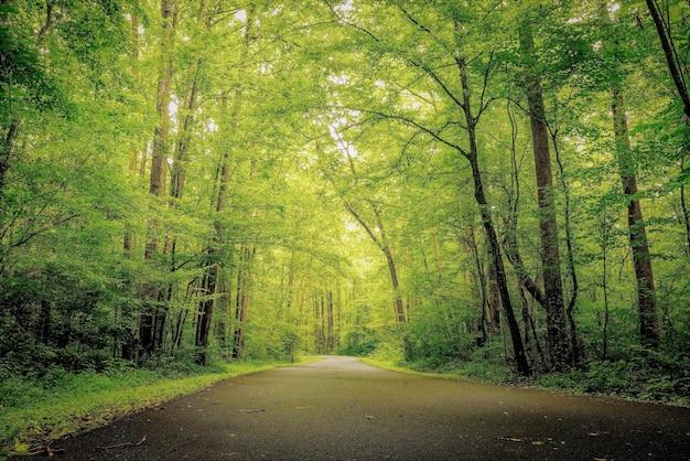 숲에서 녹지와 숲의 아름다운 샷 무료 사진