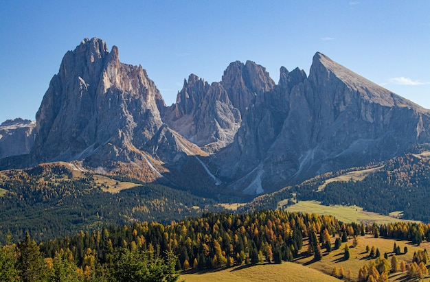 山とドロミテイタリアの木と草が茂った丘の美しいショット 無料写真
