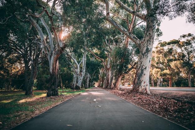 素晴らしい自然に囲まれた公園の小道の美しいショット 無料写真