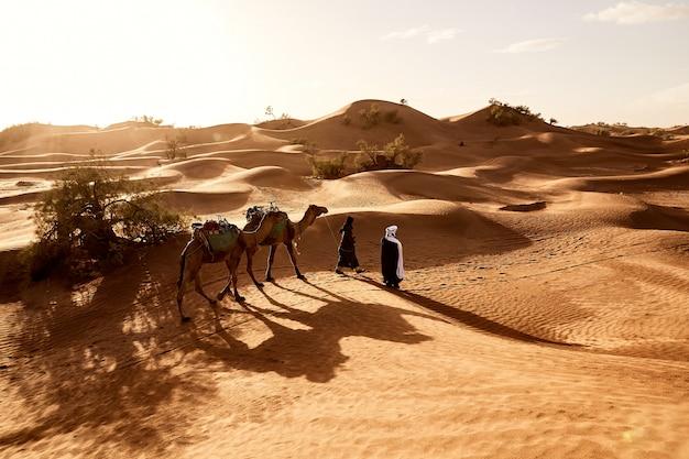 Красивая съемка людей гуляя с их верблюдами в пустыне эрг lihoudi в марокко Бесплатные Фотографии