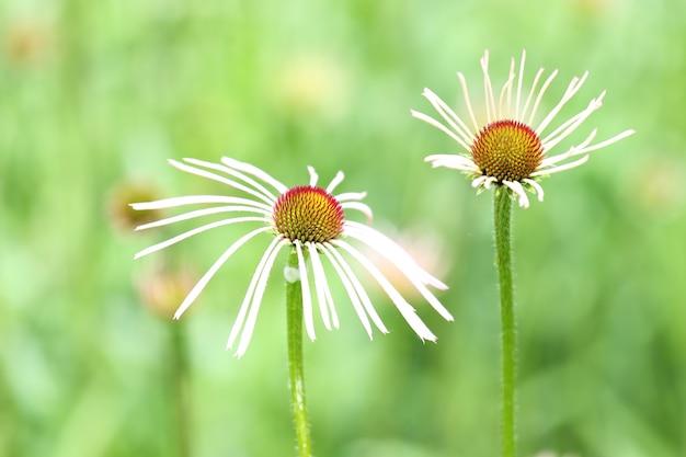 Красивый снимок цветов ромашки в королевском ботаническом саду летом Бесплатные Фотографии