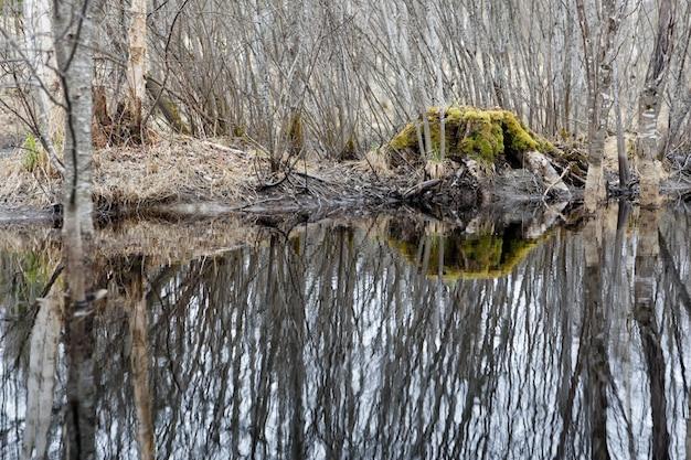 Красивый снимок воды, отражающей деревья на берегу Бесплатные Фотографии