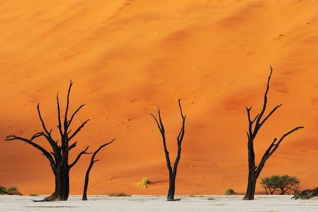 巨大なオレンジ色の砂丘を背景にした3本の裸の砂漠の木の美しいショット 無料写真