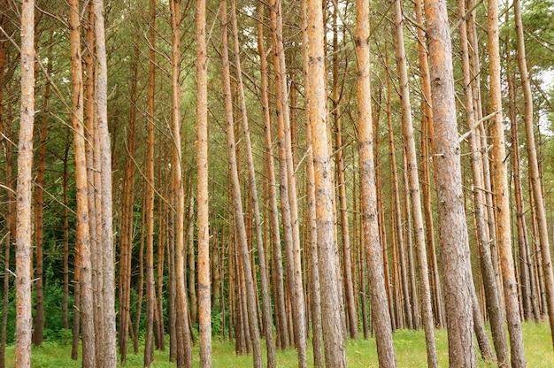 昼間の森の木々の美しいショット 無料写真
