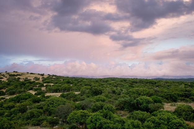 Красивый снимок деревьев в лесу с пасмурным небом на заднем плане Бесплатные Фотографии
