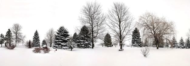 Красивый снимок деревьев с поверхностью, покрытой снегом зимой Бесплатные Фотографии