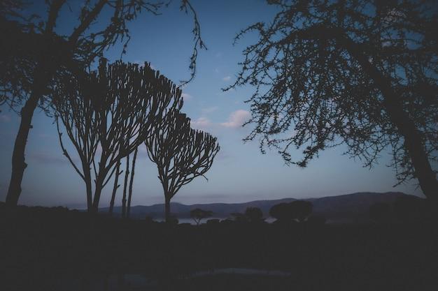 ケニアのチュイロッジで熱帯木の美しいショット。 無料写真