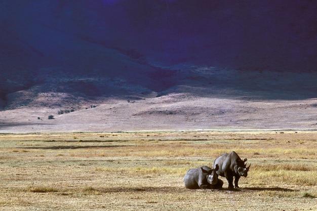 Красивая съемка двух носорогов на сухом травянистом поле с горами на расстоянии Бесплатные Фотографии