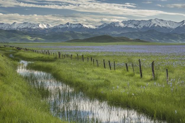 Красивый выстрел воды посреди травянистых полей с розовыми цветами и забором Бесплатные Фотографии