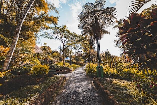 Bella ripresa di un sentiero in mezzo a alberi e piante durante il giorno a madeira, in portogallo Foto Gratuite
