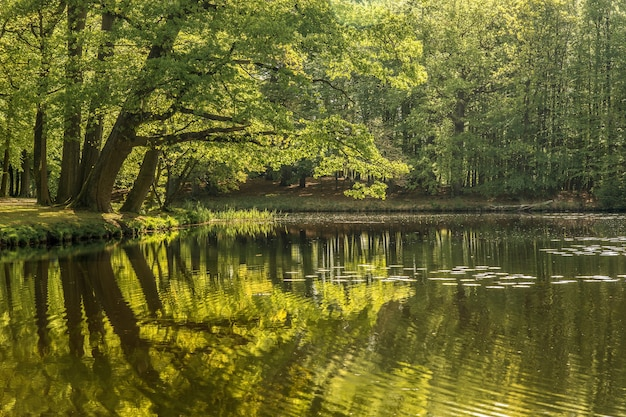 Bella ripresa di uno stagno circondato dal verde degli alberi Foto Gratuite