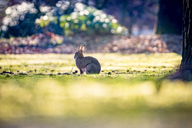Bellissimo scatto del coniglio sull'erba nel campo in una giornata di sole Foto Gratuite