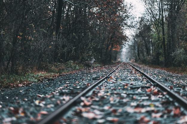Bello colpo di una ferrovia in una foresta durante la caduta Foto Gratuite