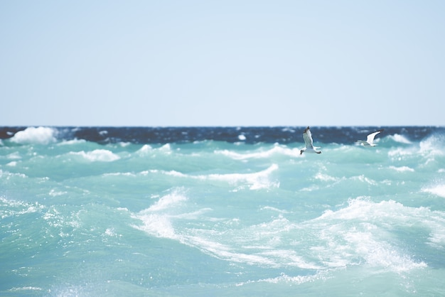Beautiful shot of seagulls flying over a sea with big waves Free Photo