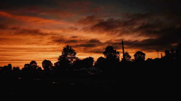Beautiful shot of silhouettes of trees under the dark orange sky at dawn - horror concept Free Photo