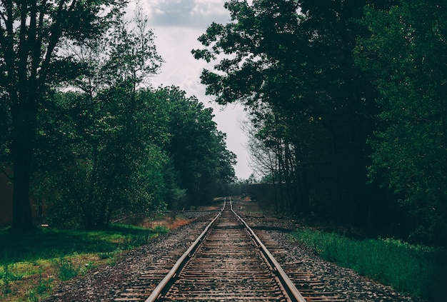 Beautiful shot of a train track surrounded by trees Free Photo