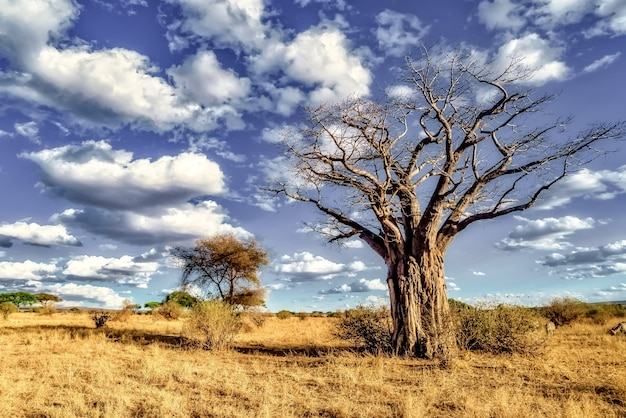 Beautiful shot of a tree in the savanna plains with the blue sky Free Photo