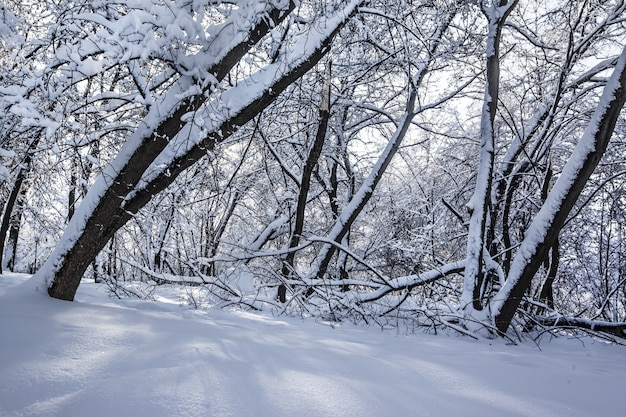 Beautiful shot of trees in a park completely covered in snow during winter in moscow, russia Free Photo