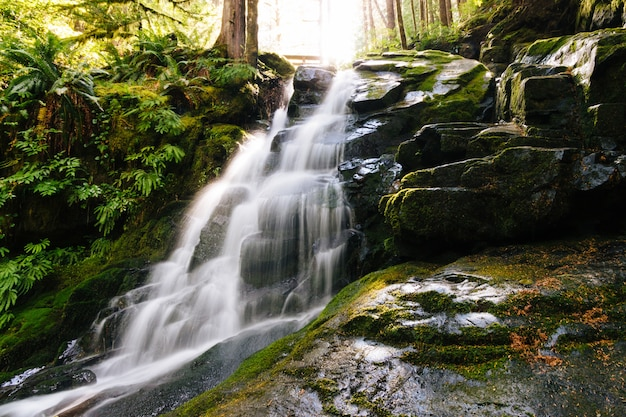 Beautiful shot of a waterfall surrounded by mossy rocks and plants in the forest Free Photo