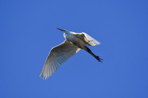 Bellissimo scatto di un uccello bianco con un lungo becco che vola nel cielo blu Foto Gratuite
