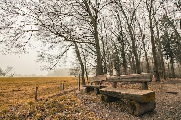 Bellissimo scatto di panche di legno in un parco forestale con un cielo cupo sullo sfondo Foto Gratuite