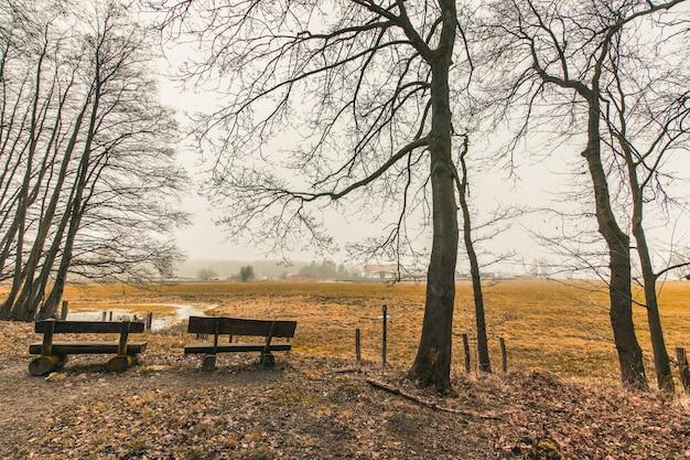 Bellissimo colpo di panche di legno in un parco forestale Foto Gratuite