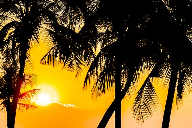 Beautiful silhouette coconut palm tree on sky neary sea ocean beach at sunset or sunrise time Free Photo