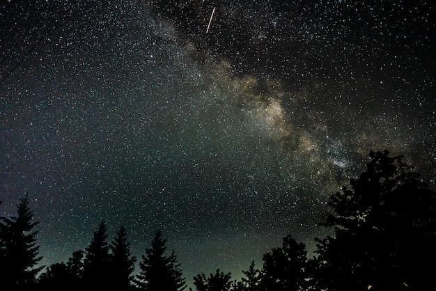 별이 빛나는 밤하늘 아래 나무의 아름다운 실루엣 샷 무료 사진
