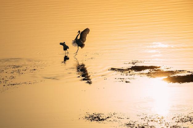 Красивые силуэты птиц на закате Premium Фотографии