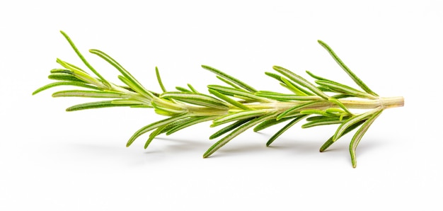 Beautiful and small branch of rosemary. foreground. isolated Premium Photo