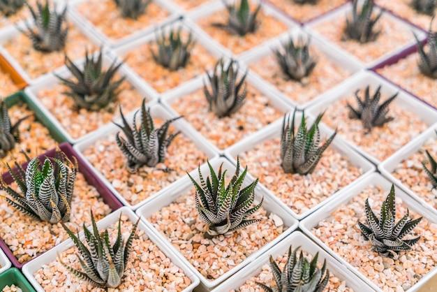 Beautiful small cactus field . Free Photo