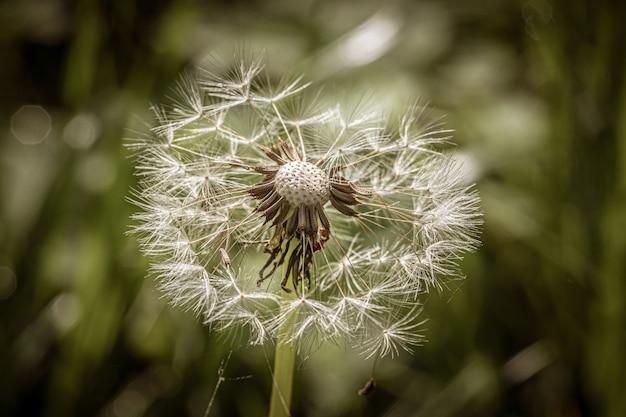 Красивый маленький одуванчик посреди травянистого поля в яркий солнечный день Бесплатные Фотографии