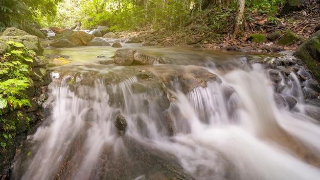 水の動きで野生の深い熱帯雨林の美しい小さな滝。 Premium写真