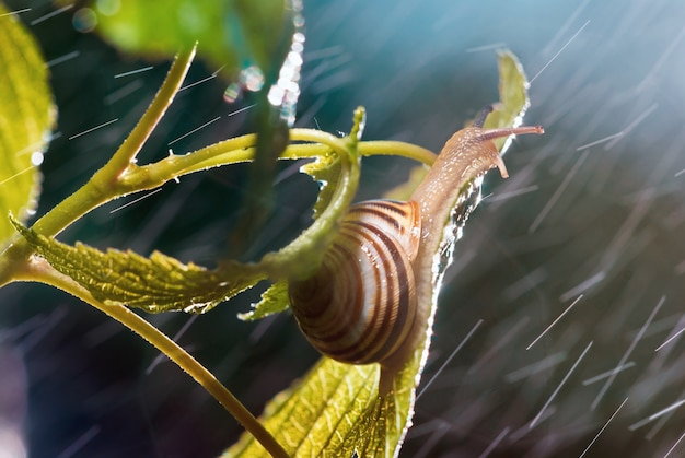 Beautiful snail under the rain Premium Photo