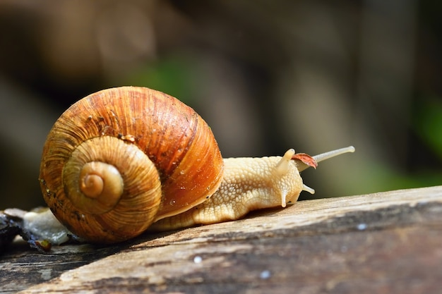 Beautiful Snail With Shell In Nature. Natural Colorful