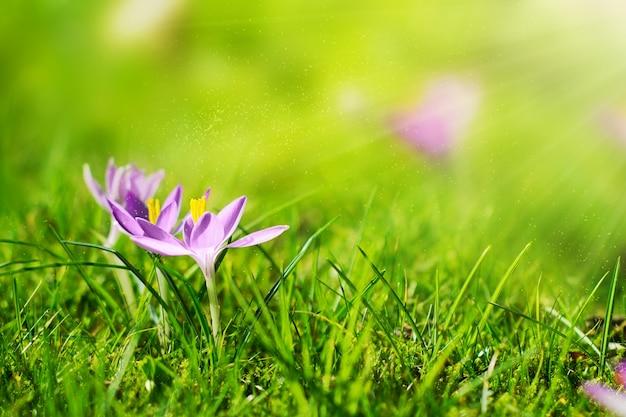 Beautiful Spring Flower Background With Sun Light Horizontal